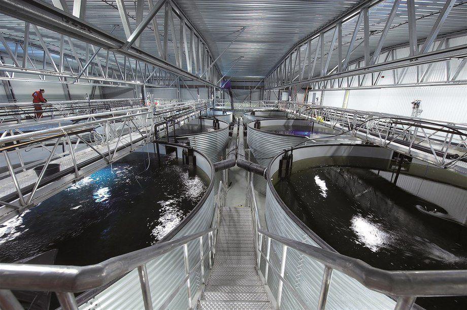 Imagen referencial de sistema de recirculación acuícola. Foto: AKVA group.