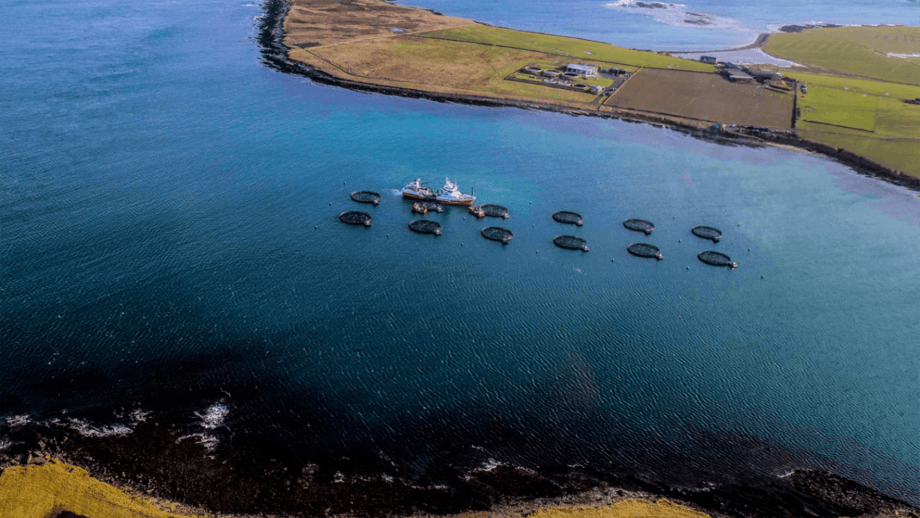 A Cooke farm in Orkney. The Canadian-owned company exports the majority of the fish it produces in Scotland to mainland Europe.