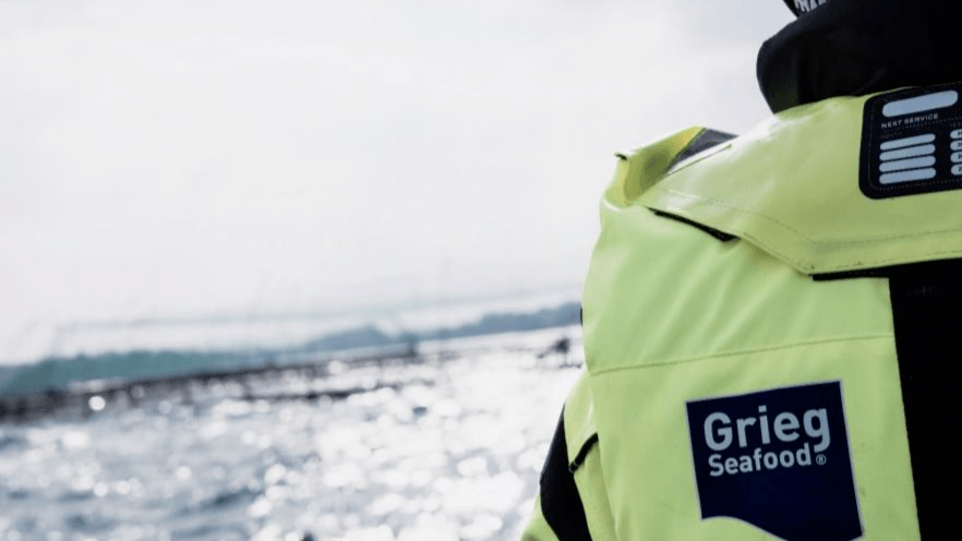 Grieg Seafood harvested a record high total of 83,000 tonnes of salmon in 2019 and expects 100,000 tonnes this year. Photo: Grieg Seafood.
