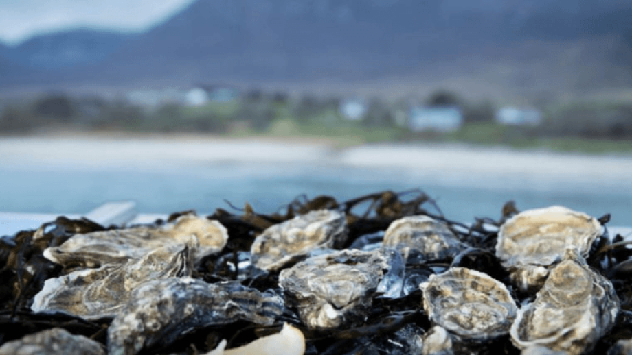 Irish oysters were worth €43 million in 2018. Photo: BIM.