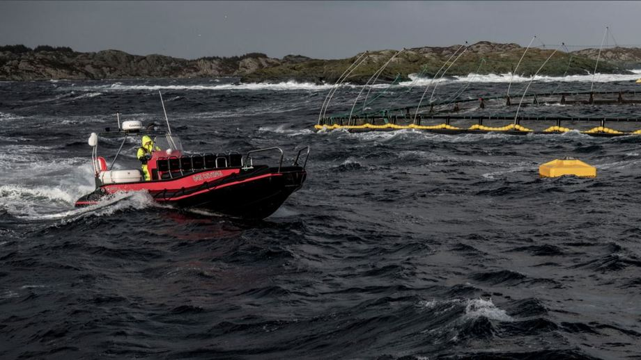 AKVA has a rough ride in Q4 but its Scotland branch did well and the group took in orders worth a record-high amount. Photo: AKVA.