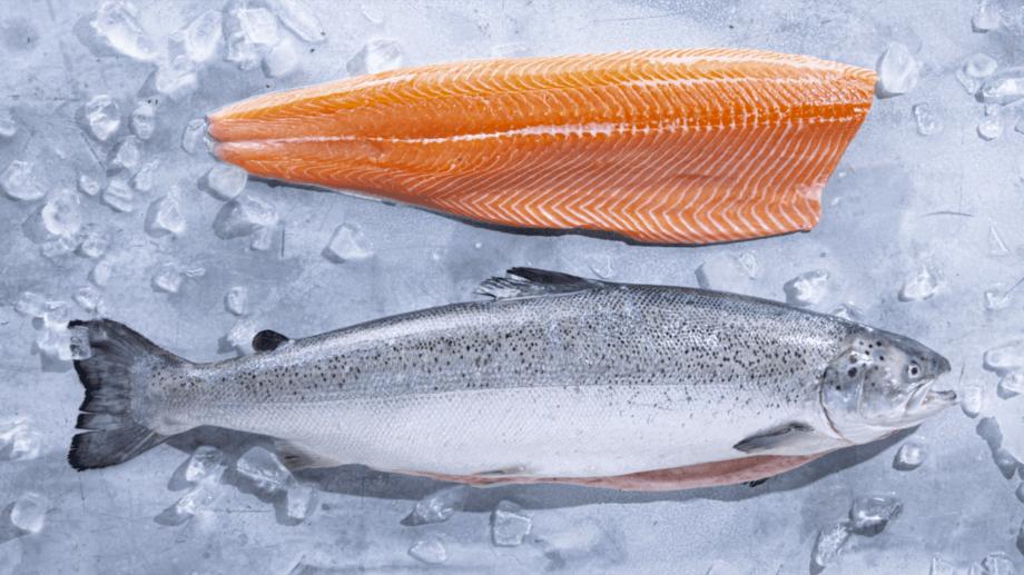 Salmón alimentado con mayor proporción de ingredientes marinos de dietas especiales. Foto: Kvarøy Arctic.