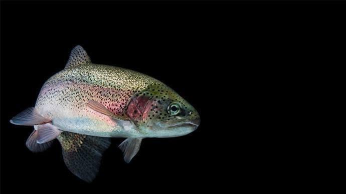 Aller Aqua's Support Concept range includes feed for trout. Photo: Aller Aqua.