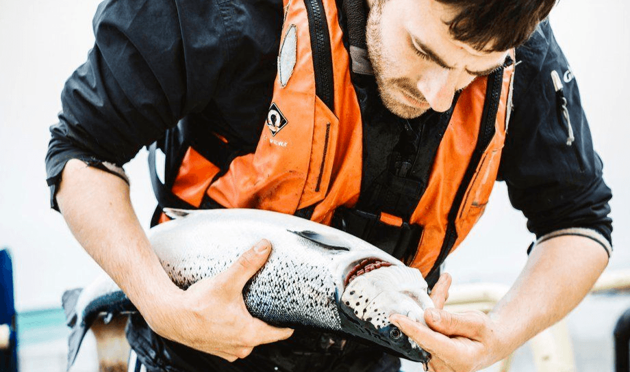 Earnings at Scottish Sea Farms in Q4 were hit by gill health issues earlier in the year, although the company still made EBIT of more than £4 million. Photo: SSF.