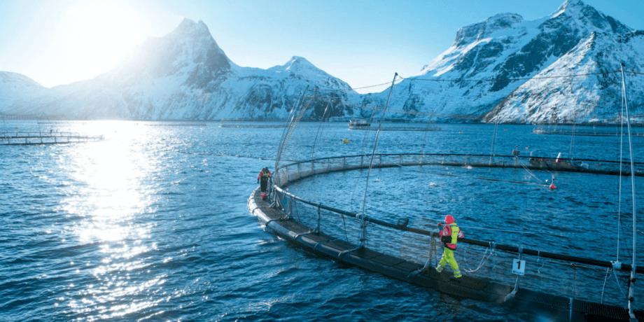 Laksenæringen fortsetter arbeidet med å optimalisere tiltakene mot lakselus, i tråd med næringens langsiktige mål om å holde vedvarende lave lusenivåer med færrest mulig behandlinger. Foto: Sjømat Norge.