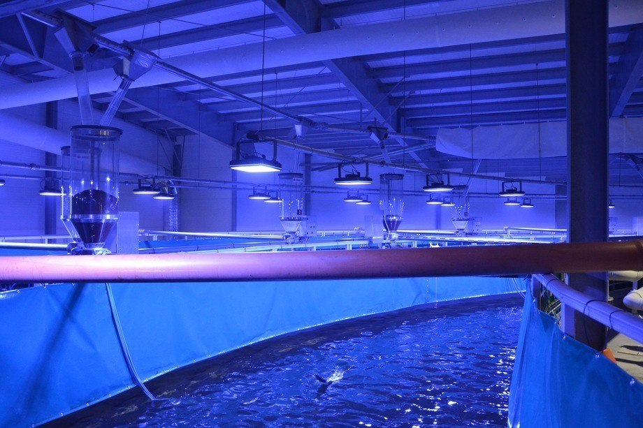 Instalaciones RAS de la compañía Nordic Aquafarms. Foto: Harrieth Lundberg.