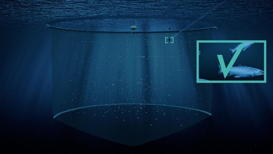 Illustrasjon/visualisering: Aquabyte