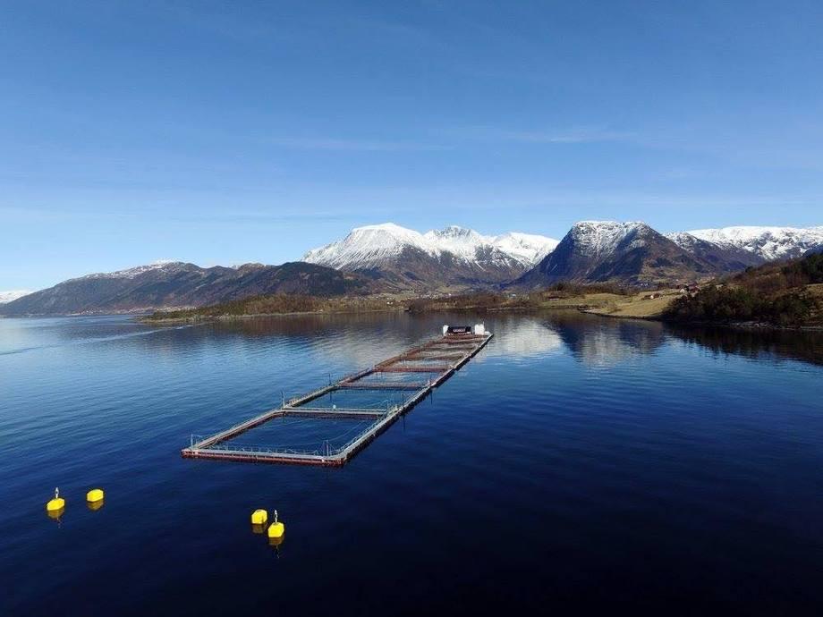 Eide Fjordbruk har måtte dele seg opp i arbeidslag for ikkje å risikere at dei får for mange i karantene samtidig. Foto: Eide Fjordbruk.