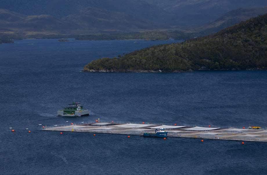 Casi el 50% de los cultivos de salmón de Chile se realizan en la región de Aysén. Foto: Blumar.