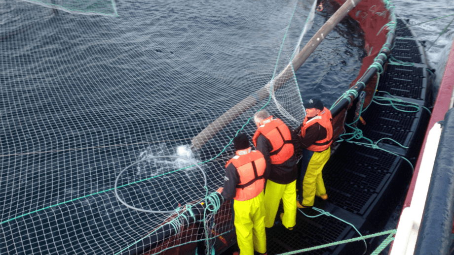 Salmon farmers have joined other food producers in calling for 'key worker' designation for business-critical staff. File photo: SSF.