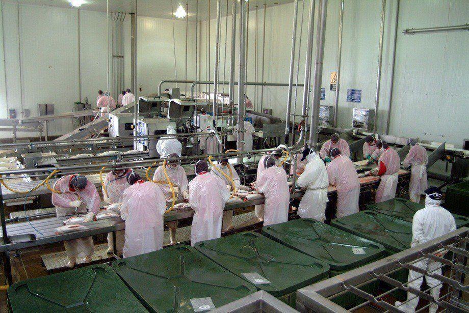 Desde el gremio aseguran que las plantas de proceso están operando de manera reducida. Imagen: Archivo Salmonexpert.