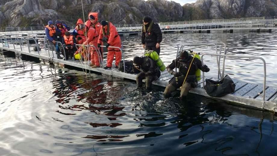 Imagen referencial de labores de buceo en centro de cultivo de salmón. Foto: Armada de Chile.
