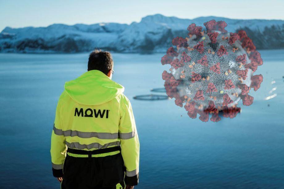 Mowi mener at etterspørselen etter laks er på vei til full friskmelding ettersom Covid-19-tiltakene blir mindre restriktive. Originalfoto: Mowii