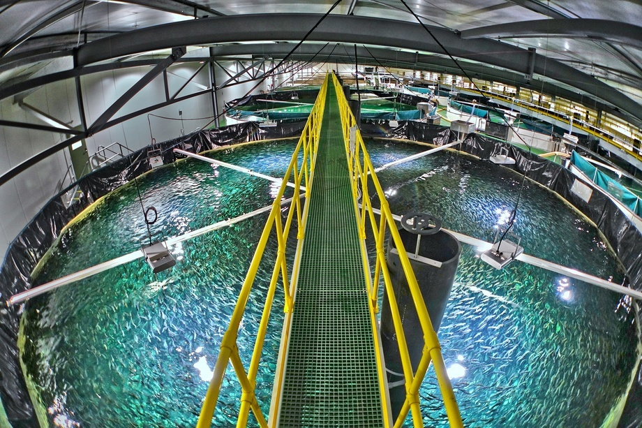 Foto: Billund Aquaculture