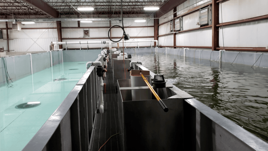 Raceways at the Finger Lakes Fish RAS facility in Auburn, New York State. Photo: Finger Lakes Fish, Inc.