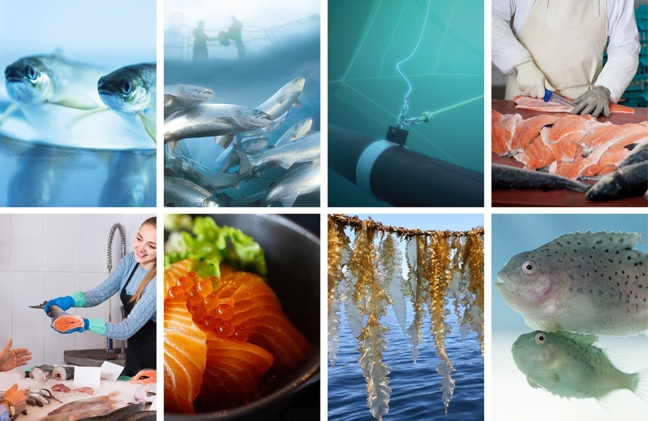 Den 9. til 10. juni vil havbruksforskere kunne formidle sin resultater digitalt som en erstatning for at den fysiske Havbruk2020 ble avlyst i mars. Foto: FHF/Norges Forskninsgråd