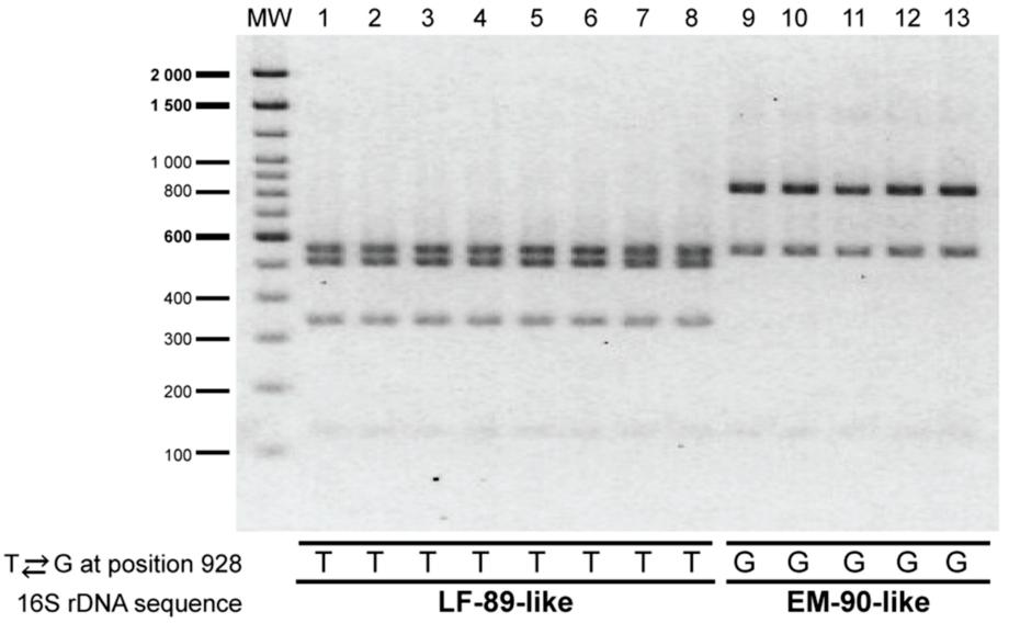 Productos de PCR sometidos a enzimas de restricción donde se aprecia la diferencia entre genogrupos. Fuente: Aravena y col., 2020.