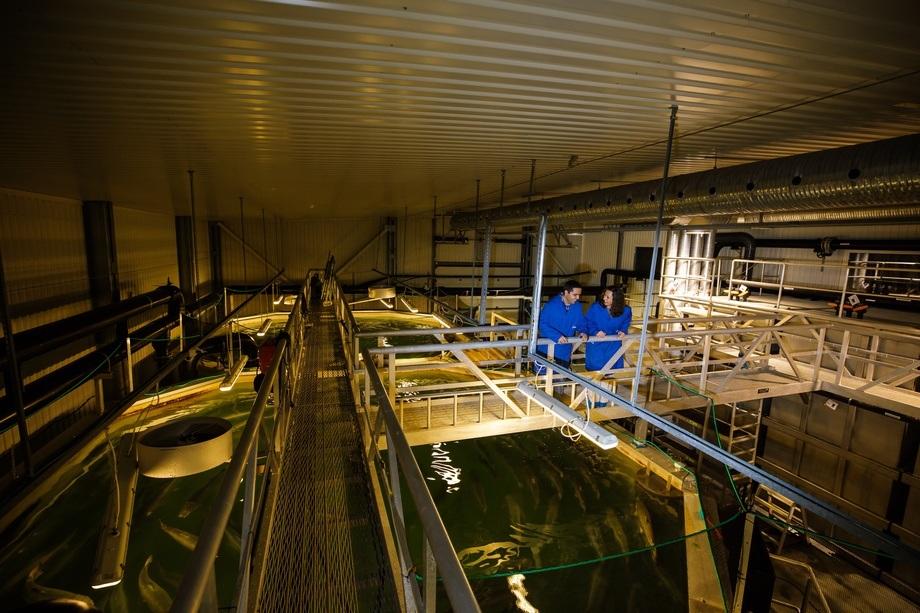 Nofima satser mer på RAS-teknologi. Her fra lokalene deres på Sunndalsøra. Foto: Nofima