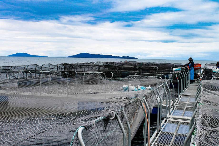 Cultivo de truchas en Lago Titicaca. Foto: Archivo Salmonexpert.