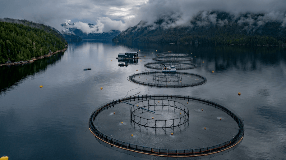 One of Grieg Seafood's five sites in Nootka Sound, all of which are now ASC certified. Photo: Grieg Seafood BC.