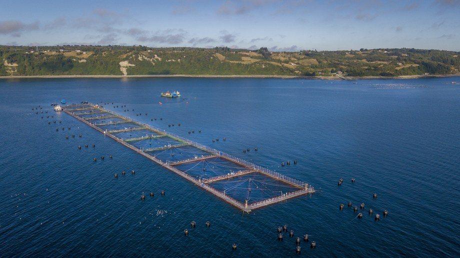 Nuevo concepto de Hendrix Genetics permitirá potenciar crecimiento de los peces. Foto: Hendrix Genetics.
