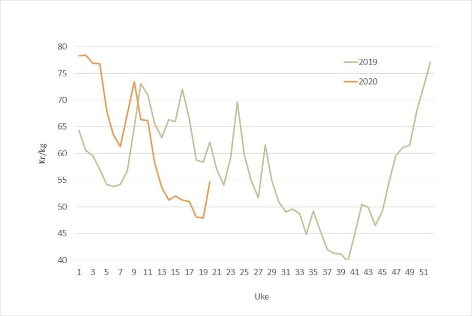 The spot price of Norwegian salmon in 2020 (orange) compared to 2019. The price jumped by more than NOK 10 per kilo last week. Data source: Akvafakta.