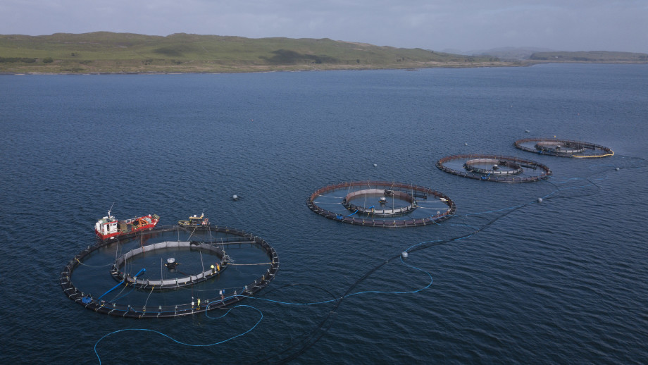 Tubenet cages in place at Port na Cro. The cages were stocked in May. Photo: Arthur Campbell / AKVA group.