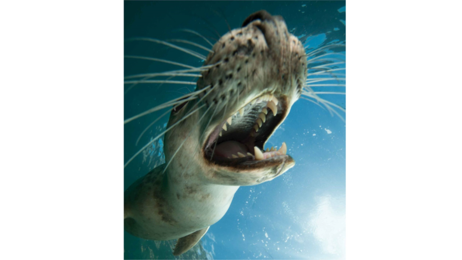 Salmon farmers and fisheries boards will no longer have dispensation to shoot seals if Scottish government plans are passed.