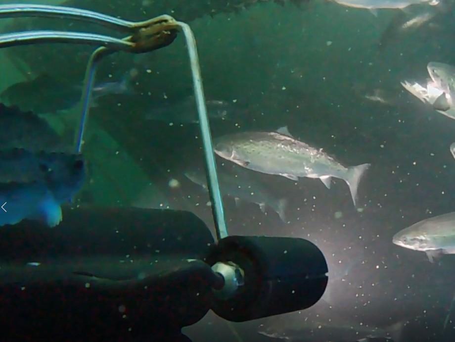 CView finnes i to versjoner. CView Eye som har ett kamera og som scanner fisken fra èn side, samt CView 360 som består av flere kamera og som skanner hele fisken. Foto: CreateView.