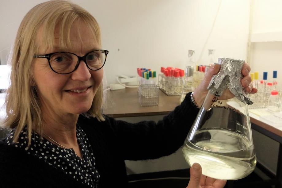 Bente Edvardsen har forsket på alger i over 30 år og vil finne ut hvorfor «dødsalgen» ble giftig. Foto: Eivind Torgersen/UiO