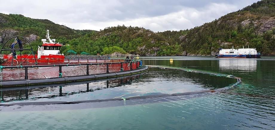 Det kreves endel musklar for å dra på plass luseskjørtet hos Flokenes Fiskefarm og fartøyet