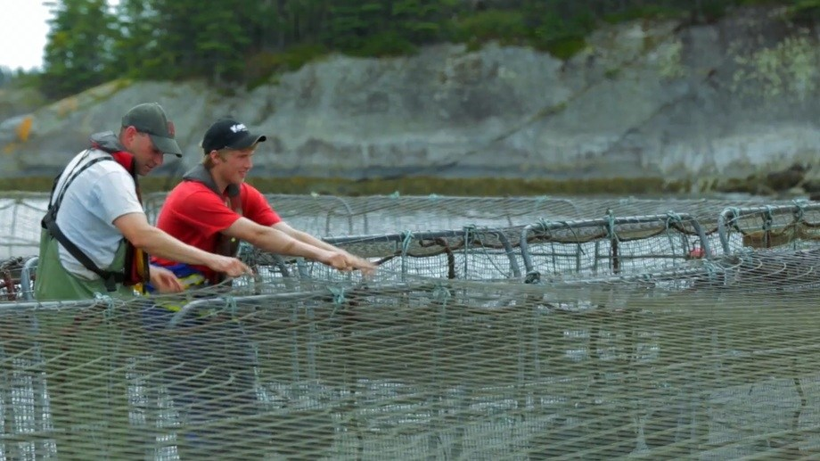 Salmon farmers in Atlantic Canada. In a poll of 1,500 adults, 86% agreed salmon farming provides important employment opportunities. Photo: ACFFA video.