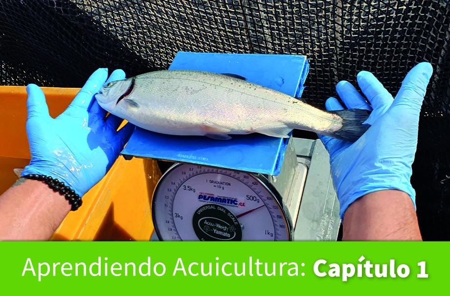 Jurij Wacyk de la Universidad de Chile es el autor del primer capítulo. Imagen: Salmonexpert.