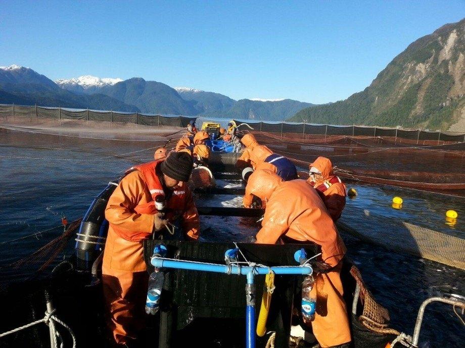 La industria chilena del salmón sigue ampliando el uso de tratamientos distintos a los farmacológicos. Foto: Kuntur Servicios Acuícolas.