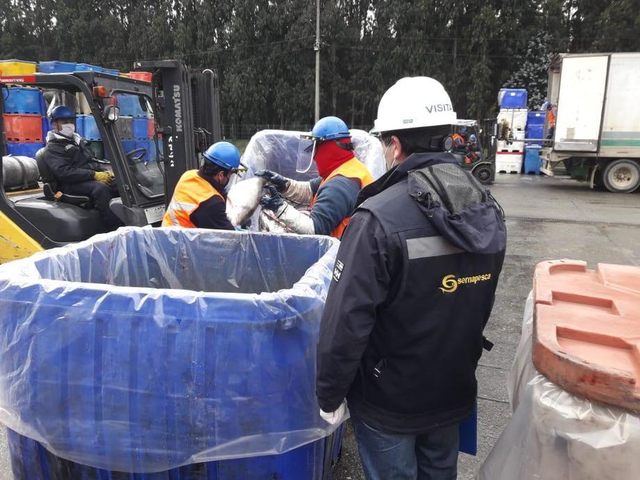 Sernapesca fiscalizando las labores de recaptura de Blumar. Foto: Sernapesca.