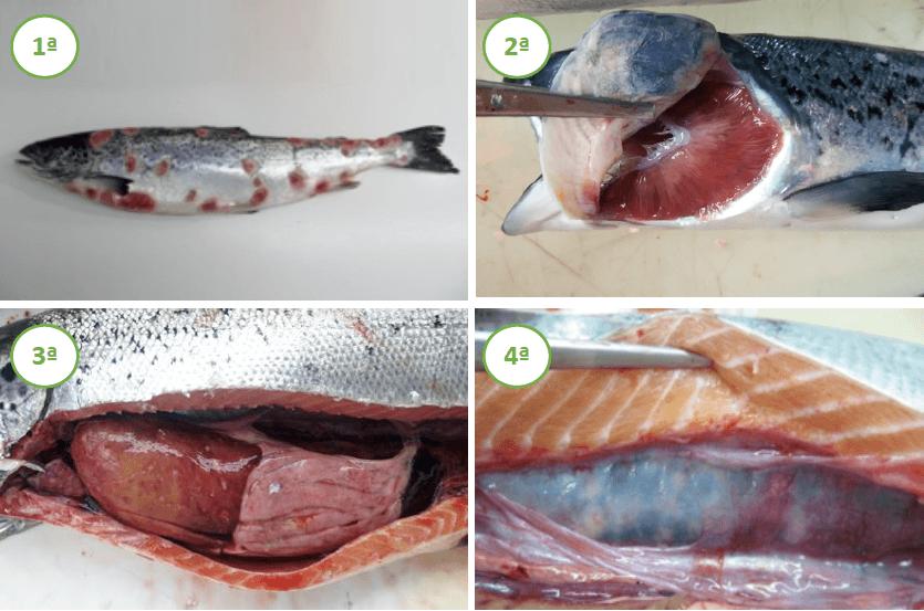 La aplicación permite el diagnóstico de la patología con cuatro imágenes (figura 1). Imagen: Newenko Group.