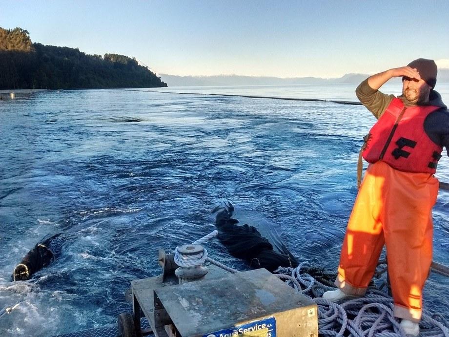 Acciones de fiscalización tras el escape de salmones desde el centro Playa Maqui. Foto: Sernapesca.