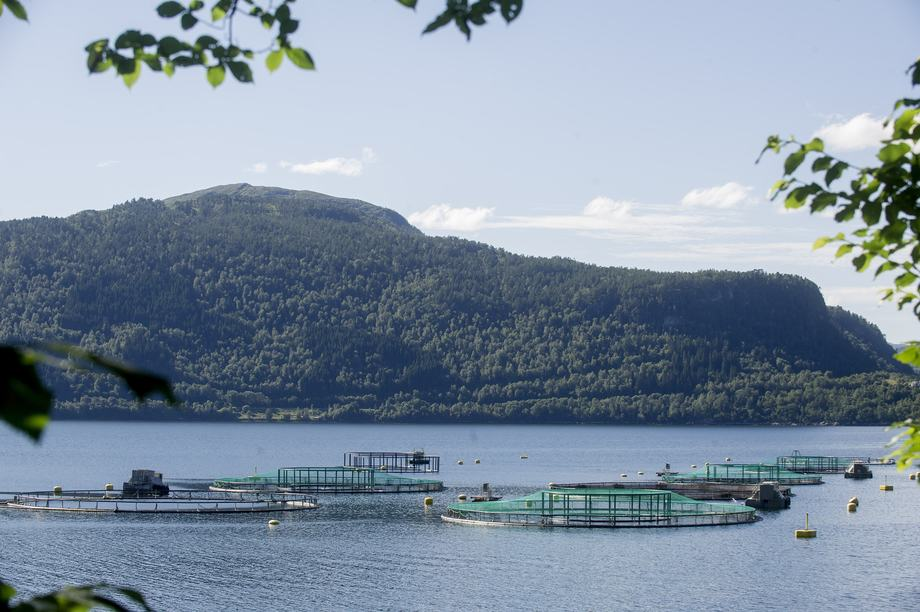 Aquagen sin lokalitet i Tingvollfjorden. Foto: Aquagen