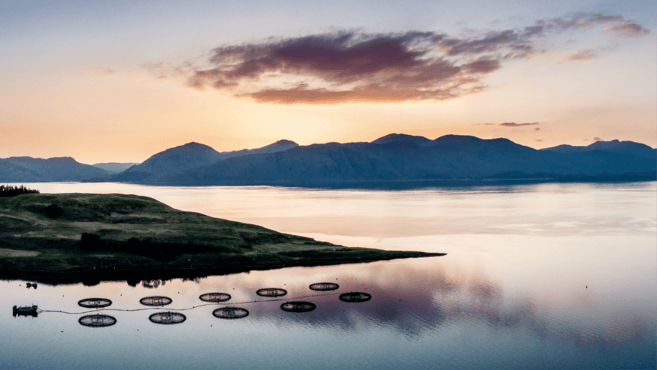 SAIC is offering match funding of up to £50,000 to innovators who can help the aquaculture industry adapt to a new commercial and operational reality resulting from Covid-19. A decision is promised within 10 weeks of application. Photo: SAIC.