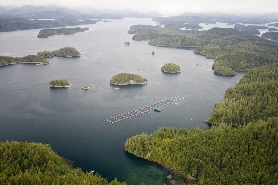 Centro de cultivo Mowi Canadá Oeste. Foto: Archivo Salmonexpert.