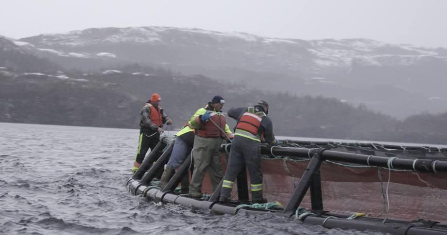 Centro de salmón de Cooke Aquaculture en el Atlántico de Canadá. Foto: Cooke Aquaculture.