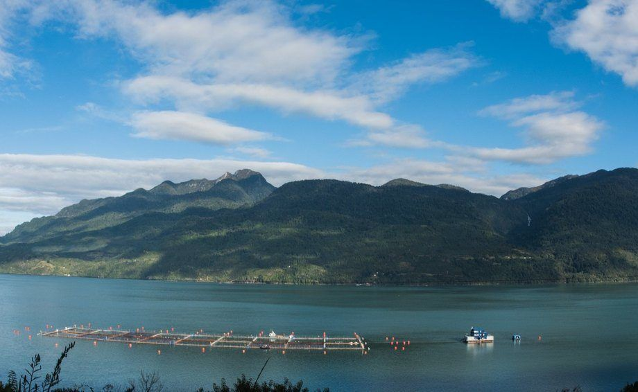 Cultivo de salmón en la región de Aysén. Foto: Archivo Salmonexpert.