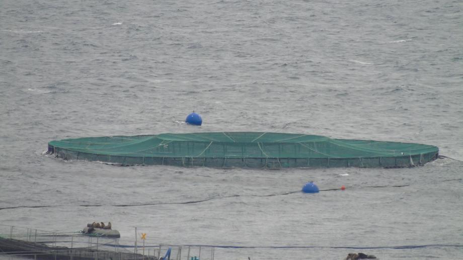 Balsa jaula perteneciente a proyecto de acuicultura oceánica en el centro de cultivo Traiguén II, en Chiloé. Foto: EcoSea Farming.