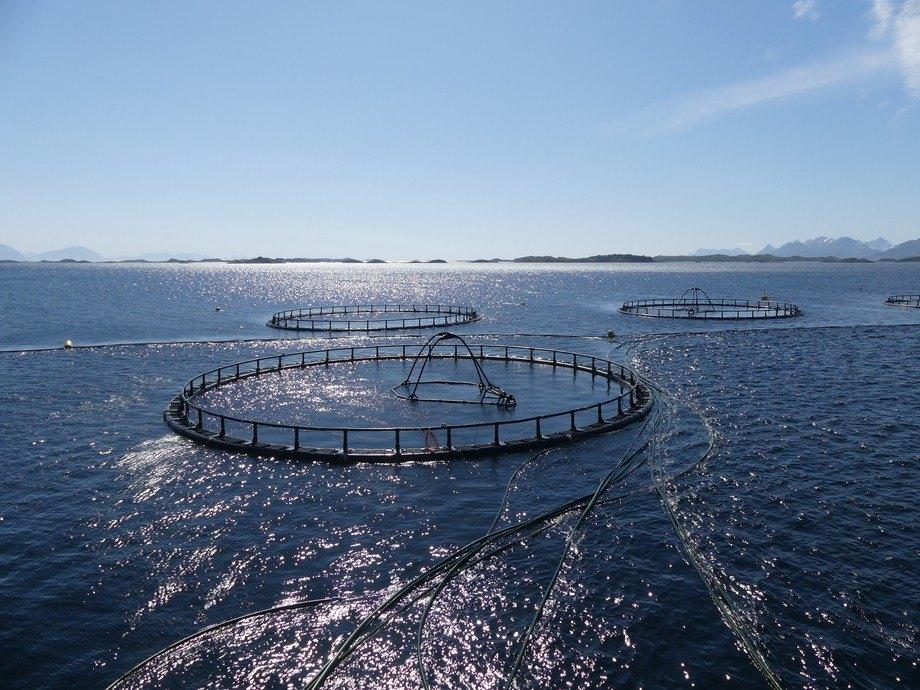 Fiskeridirektoratet avslørte med en feil hvilke selskaper som vil by på laksevekst. Illustrasjonsfoto: Ole Andreas Drønen