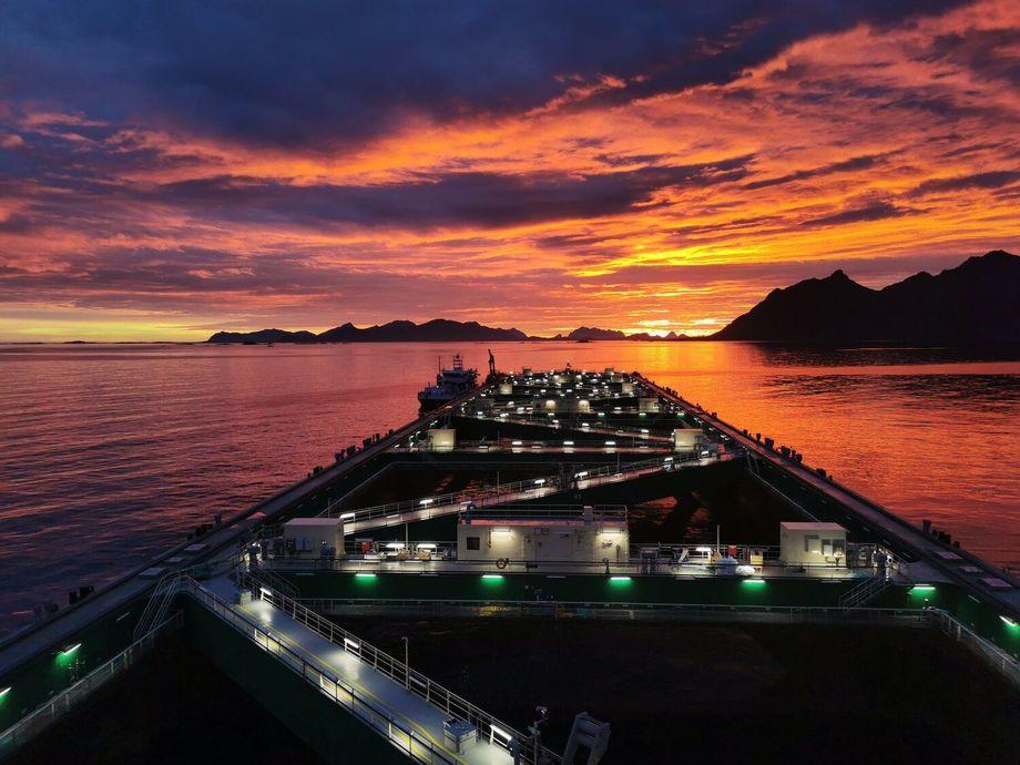 Sommernatta i Hadsel viste seg fra sin aller beste side når den første laksen kom ombord i havfarmen. Foto: Nordlaks