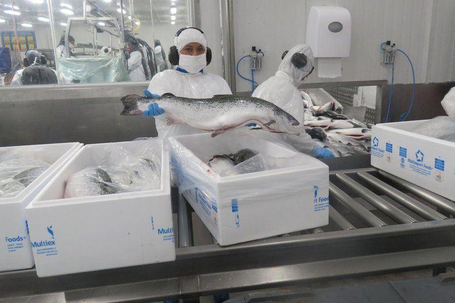 En 2019, Multiexport Foods envió 505 toneladas de residuos desde su planta de proceso en Puerto Montt a rellenos sanitarios. Foto: Archivo Salmonexpert.