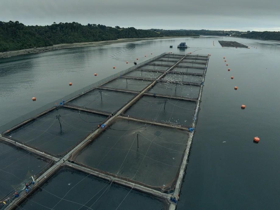 Este año, el reconocimiento en la categoría salmón Atlántico fue para el centro Estero Riquelme de Cermaq. Imagen: Cargill.