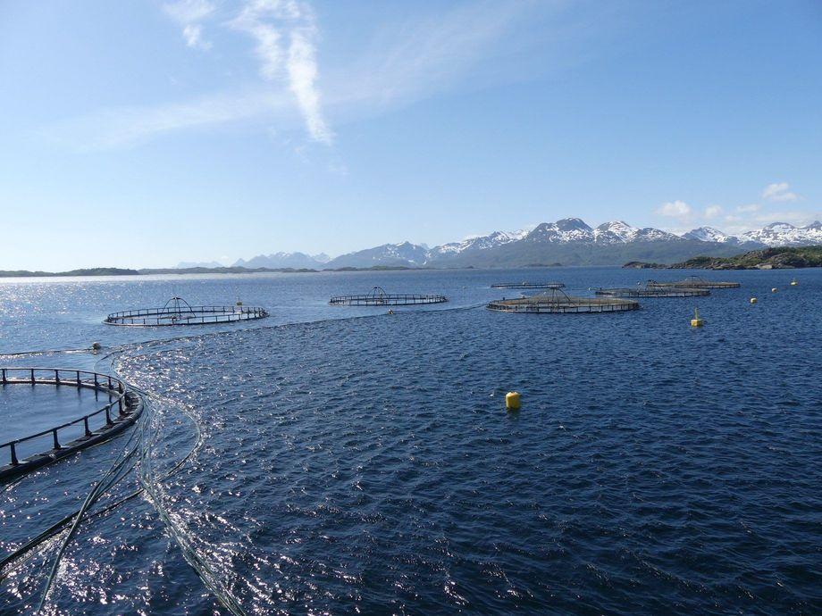 Centro de cultivo de salmón en Noruega. Foto: Kyst.no.