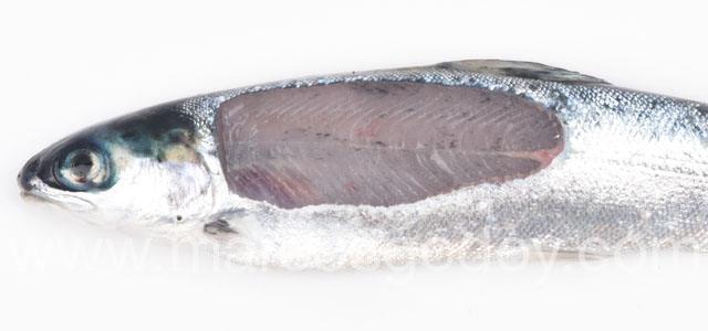 Melanosis difusa en smolt de salmón Atlántico. Foto: Marcos Godoy.