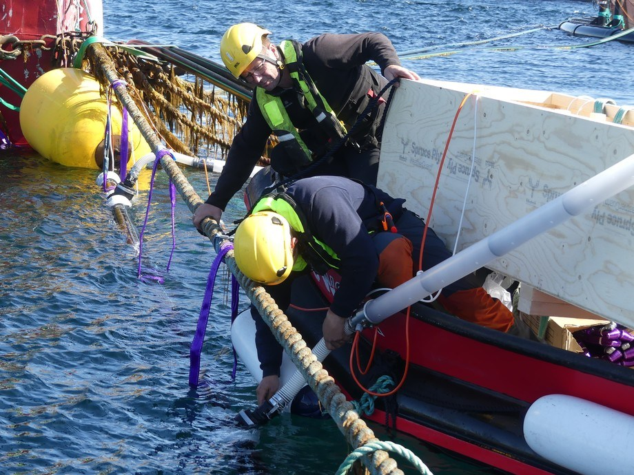 Folden Akva driver med maritime servicetjenester i Nordland, og har vært til god hjelp under installasjonen av lusefellene hos Ellingsen Seafood. Foto: Ole Andreas Drønen